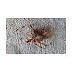 Crab Spider Home Rectangle Car Magnet