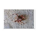 Crab Spider Home Car Magnet 20 x 12