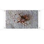 Crab Spider Home Banner