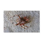 Crab Spider Home Wall Decal