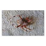 Crab Spider Home Sticker