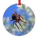 Red Thin Leg Wolf Spider on Web in blue Ornament