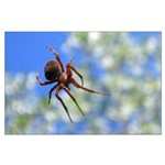 Red Thin Leg Wolf Spider on Web in blue Posters