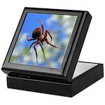 Red Thin Leg Wolf Spider on Web in blue Keepsake B
