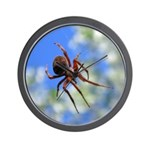 Red Thin Leg Wolf Spider on Web in blue Wall Clock