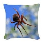 Red Thin Leg Wolf Spider on Web in blue Woven Thro