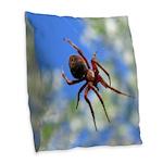 Red Thin Leg Wolf Spider on Web in blue Burlap Thr