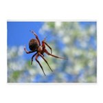 Red Thin Leg Wolf Spider on Web in blue 5'x7'Area