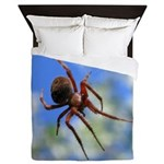 Red Thin Leg Wolf Spider on Web in blue Queen Duve