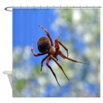 Red Thin Leg Wolf Spider on Web in blue Shower Cur