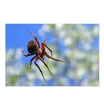 Red Thin Leg Wolf Spider on Web in blue Postcards