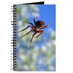 Red Thin Leg Wolf Spider on Web in blue Journal