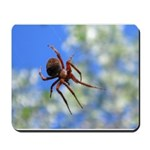 Red Thin Leg Wolf Spider on Web in blue Mousepad