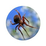 Red Thin Leg Wolf Spider on Web in blue 3.5