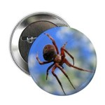 Red Thin Leg Wolf Spider on Web in blue 2.25