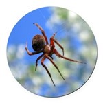Red Thin Leg Wolf Spider on Web in blue Round Car