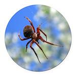 Red Thin Leg Wolf Spider on Web in blue Round Car