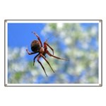 Red Thin Leg Wolf Spider on Web in blue Banner