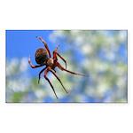 Red Thin Leg Wolf Spider on Web in blue Sticker