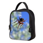 Red Thin Leg Wolf Spider on Web in blue Neoprene L