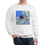 Red Thin Leg Wolf Spider on Web in blue Sweatshirt