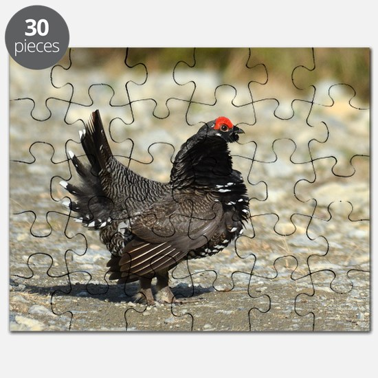 Male spruce grouse 2 Puzzle