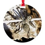 Furry Wolf Spider on Rocks Ornament