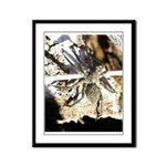 Furry Wolf Spider on Rocks Framed Panel Print