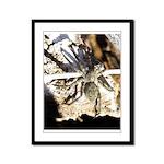 Furry Wolf Spider on Rocks Framed Panel Print