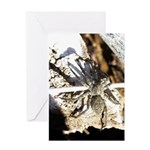 Furry Wolf Spider on Rocks Greeting Cards