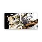 Furry Wolf Spider on Rocks Aluminum License Plate