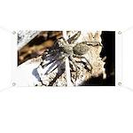 Furry Wolf Spider on Rocks Banner