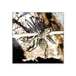 Furry Wolf Spider on Rocks Sticker