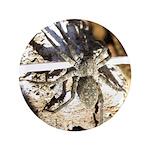Furry Wolf Spider on Rocks 3.5
