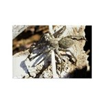 Furry Wolf Spider on Rocks Magnets