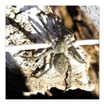 Furry Wolf Spider on Rocks Square Car Magnet 3