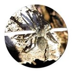 Furry Wolf Spider on Rocks Round Car Magnet