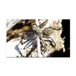 Furry Wolf Spider on Rocks Rectangle Car Magnet