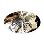 Furry Wolf Spider on Rocks Oval Car Magnet
