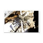 Furry Wolf Spider on Rocks Car Magnet 20 x 12
