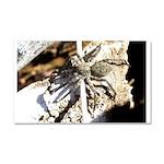 Furry Wolf Spider on Rocks Car Magnet 20 x 12