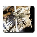 Furry Wolf Spider on Rocks Mousepad