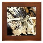 Furry Wolf Spider on Rocks Framed Tile
