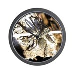Furry Wolf Spider on Rocks Wall Clock