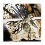 Furry Wolf Spider on Rocks Tile Coaster