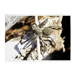 Furry Wolf Spider on Rocks 5'x7'Area Rug