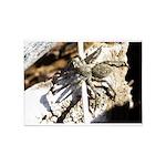 Furry Wolf Spider on Rocks 5'x7'Area Rug