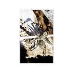 Furry Wolf Spider on Rocks 3'x5' Area Rug