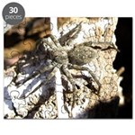 Furry Wolf Spider on Rocks Puzzle