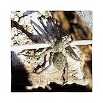 Furry Wolf Spider on Rocks Queen Duvet